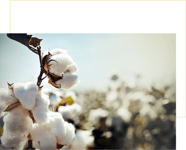 Sustainable Sourcing & Cotton Farming Projects